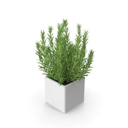 Rosemary Square Pot