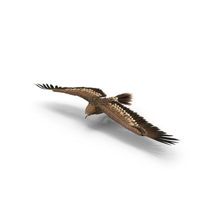 Torneado de águila imperial