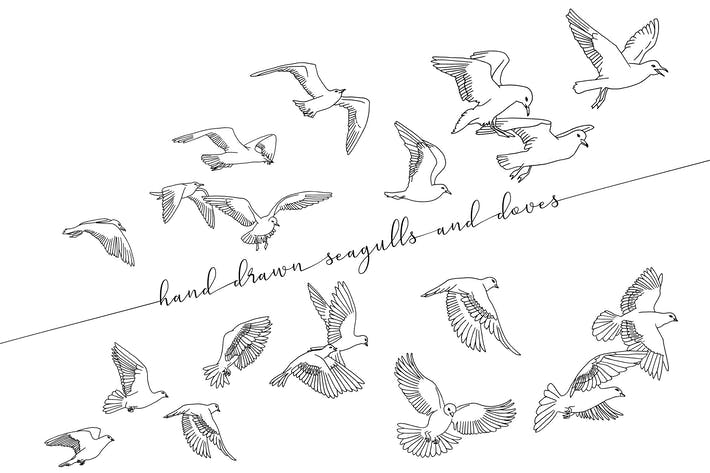 Hand Drawn Seagulls And Doves
