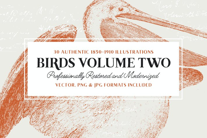 Cover Image For 30 Bird Illustrations (With Fills)