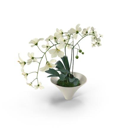 Weiße Blumen im weißen Topf
