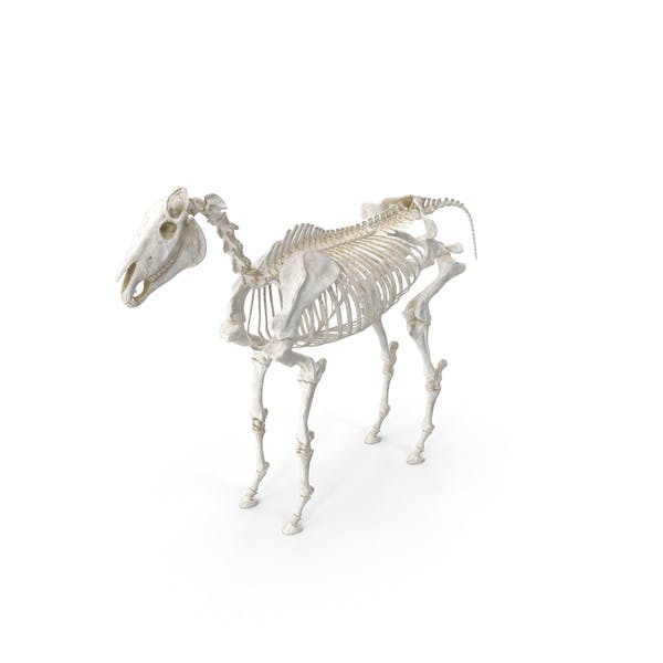 Скелет лошади pc