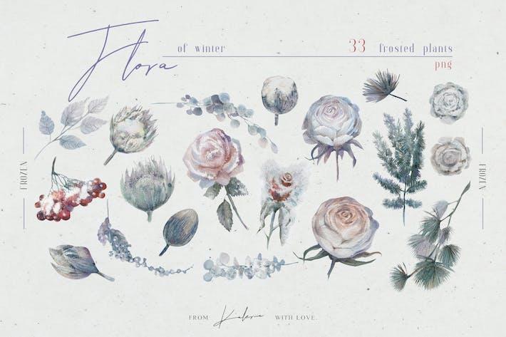 Thumbnail for Winterflora - Aquarell Blumen und Blätter