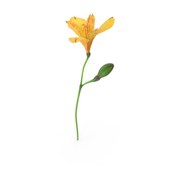 Cover Image for Peruvian Lily
