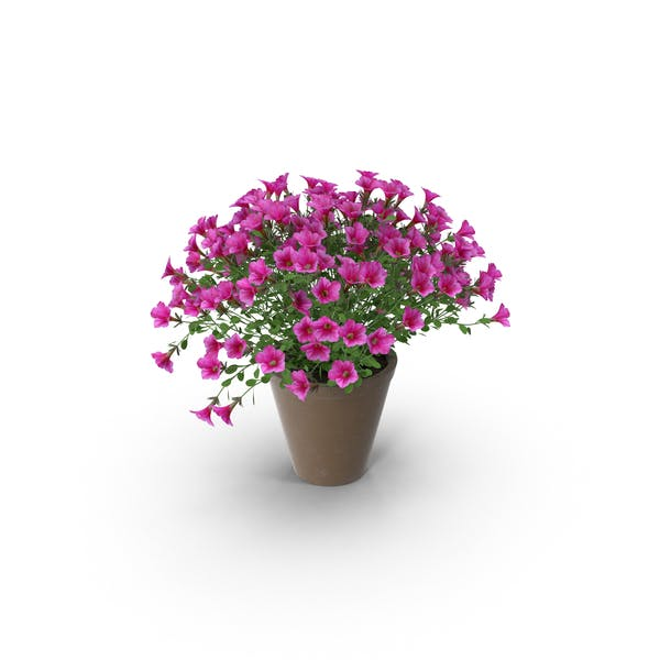Thumbnail for Petunia in Brown Pot