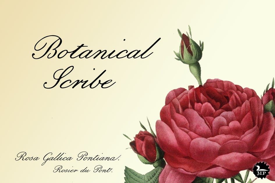 Download Botanical Scribe by 3ipfonts