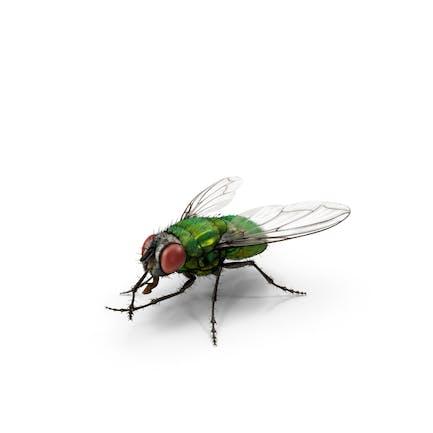Grüne Flasche Fly Reiben Hände