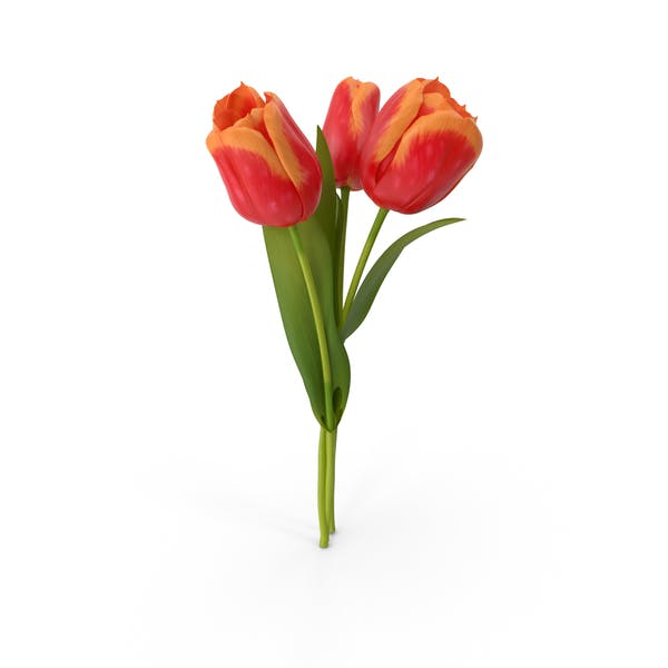 Thumbnail for Tulip