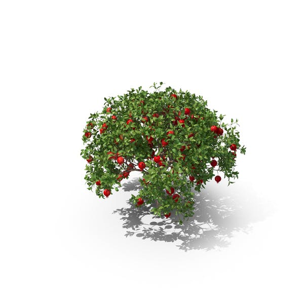 Cover Image for Pomegranate Tree