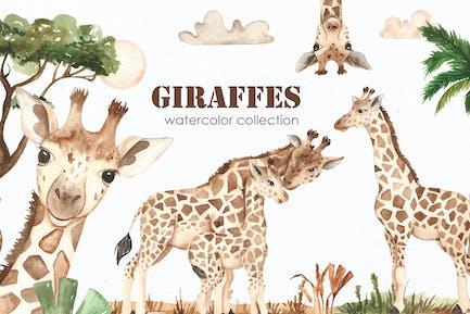Aquarell Giraffen