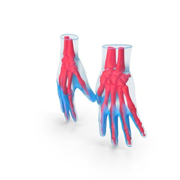Анатомия рук Синий