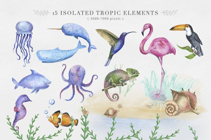 Ocean and Tropical animal Clipart
