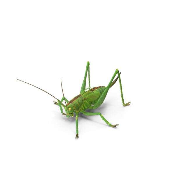 Cover Image for Grasshopper