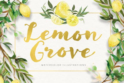 Lemon Grove Watercolor Illustrations