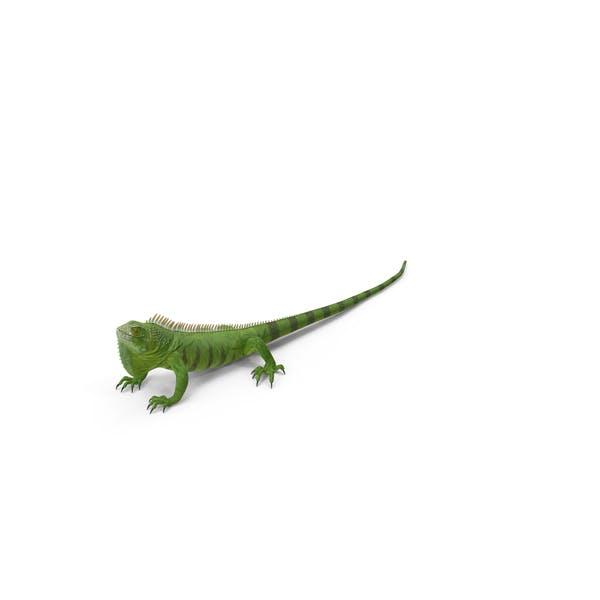 Thumbnail for Зеленая Игуана