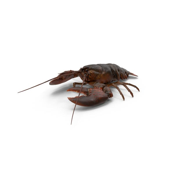 Thumbnail for Lobster