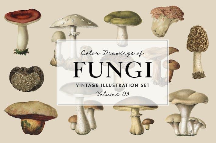 Thumbnail for Fungi Vol. 3 - Vintage Illustrations