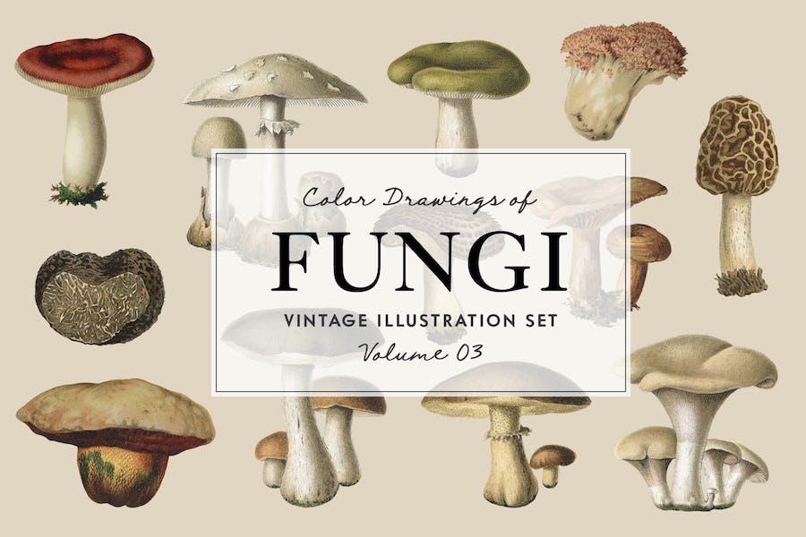 Fungi Vol. 3 - Vintage Illustrations