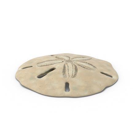 Schlüsselloch Sand Dollar