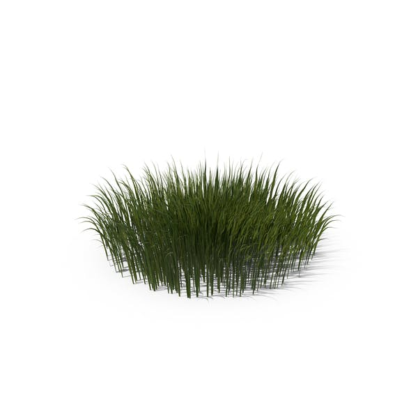 Thumbnail for Patch of Grass