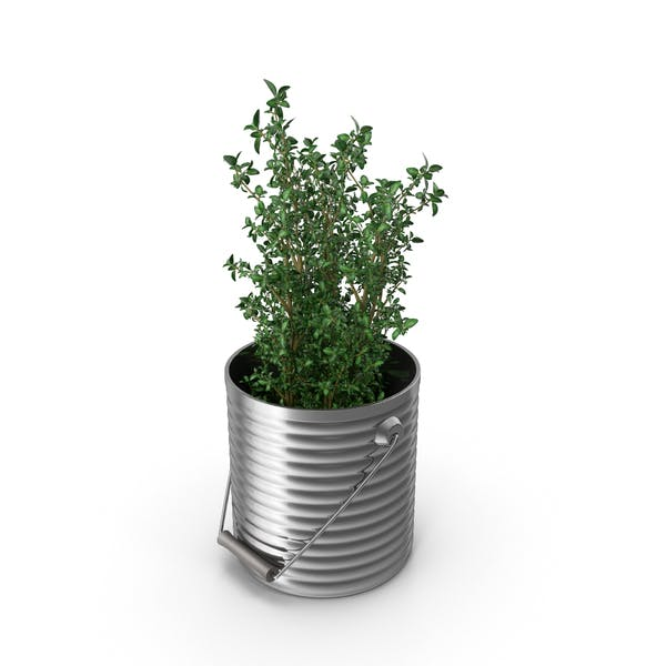 Cover Image for Thyme Plant