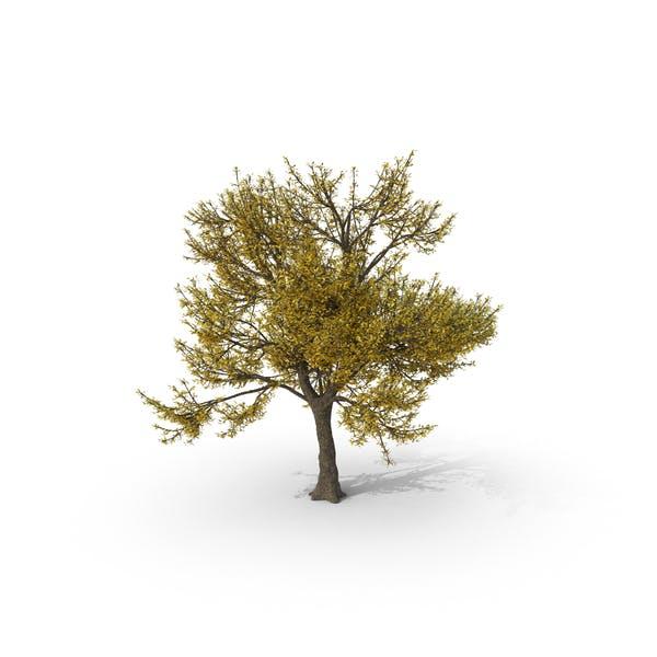 Thumbnail for Fall Ash Tree