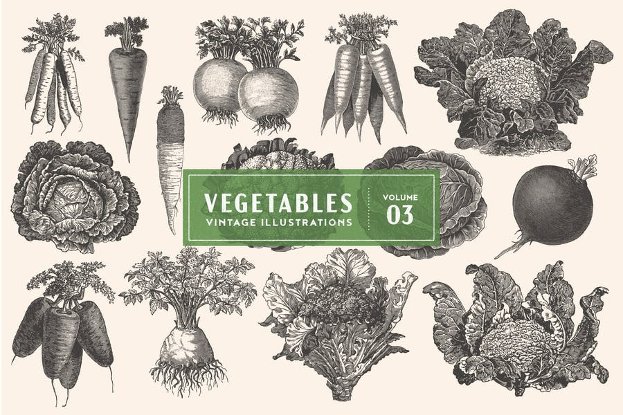 Vintage Vegetable Illustrations Vol. 3