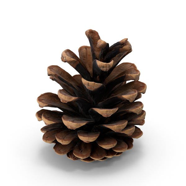 Cover Image for Pine Cone