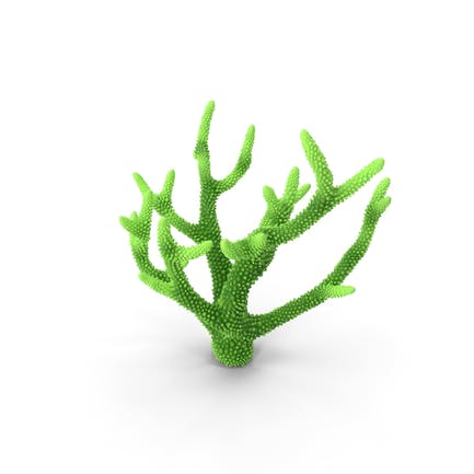 Korallengrün