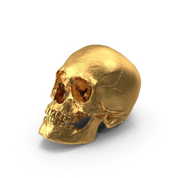 Cover Image for Gold Skull