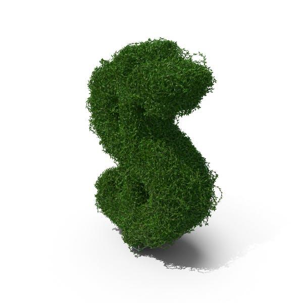 Buchsbaum Symbol $