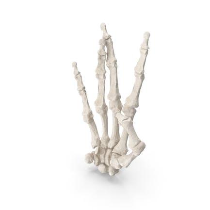 Menschliche Handknochen White West Side Zeichen