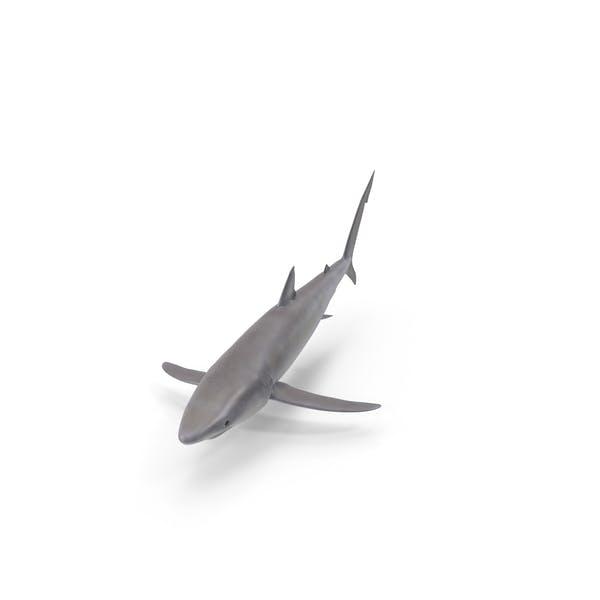 Thumbnail for Shark
