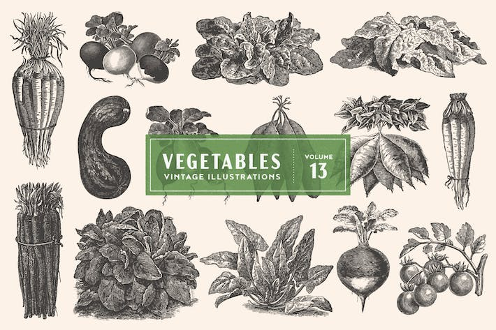 Cover Image For Vintage Vegetable Illustrations Vol. 13