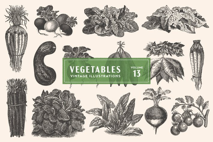 Thumbnail for Vintage Vegetable Illustrations Vol. 13
