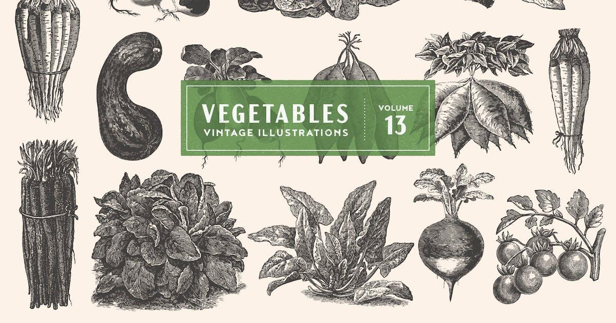 Download Vintage Vegetable Illustrations Vol. 13 by GraphicGoods