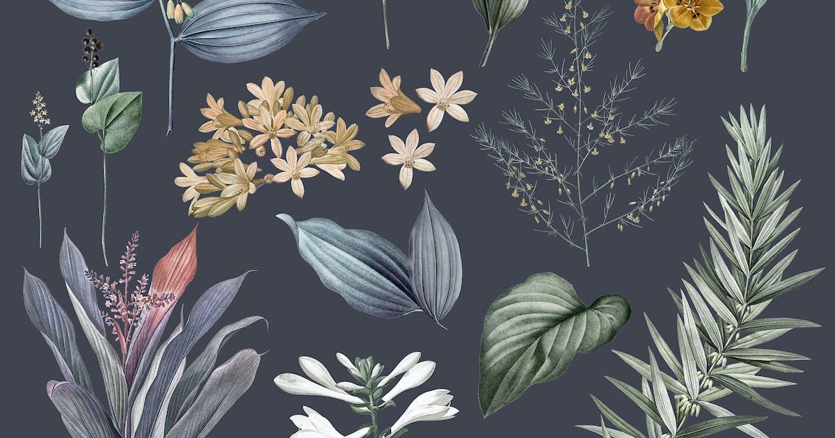 Download Vintage Botanical Drawings Mockup by Rawpixel