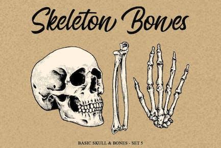 Skelett Knochen Satz 5