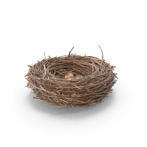 Thumbnail for Bird Nest With Quail Eggs