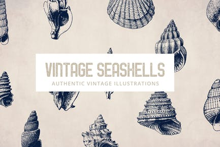 135 Seashell Illustration Collection