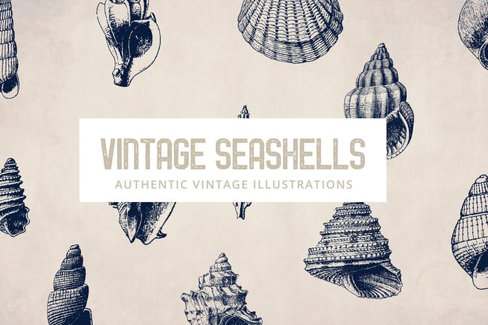 Thumbnail for 135 Seashell Illustration Collection