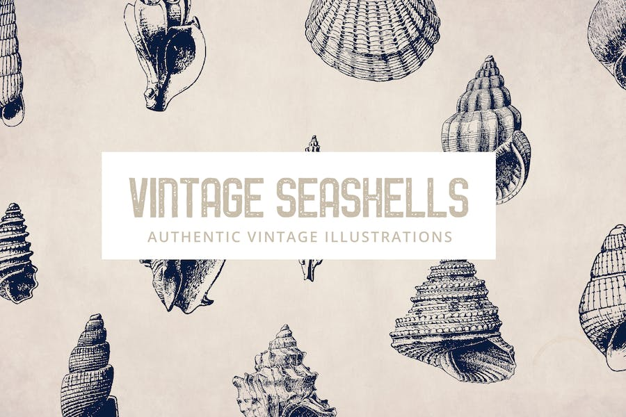 135 Seashell Illustration Collection - product preview 0