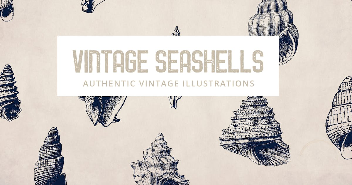 Download 135 Seashell Illustration Collection by andrewtimothy