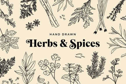 Hand Drawn Herbs & Spices