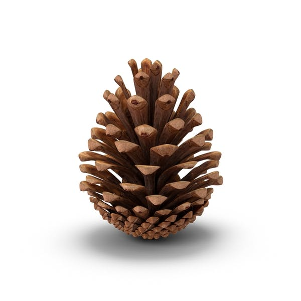 Thumbnail for Fir Cone