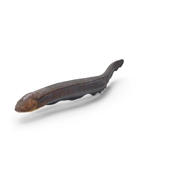 Electric Eel Swimming Pose