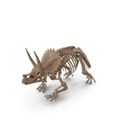 Triceratops Horridus Skeleton Fossil