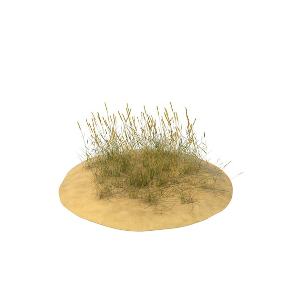 Sand Dunes with Grass