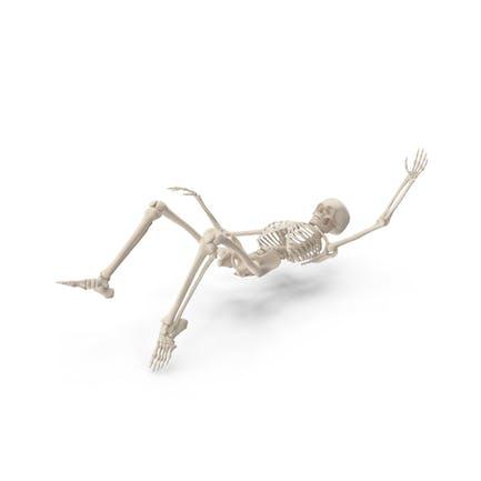 Skeleton Falling