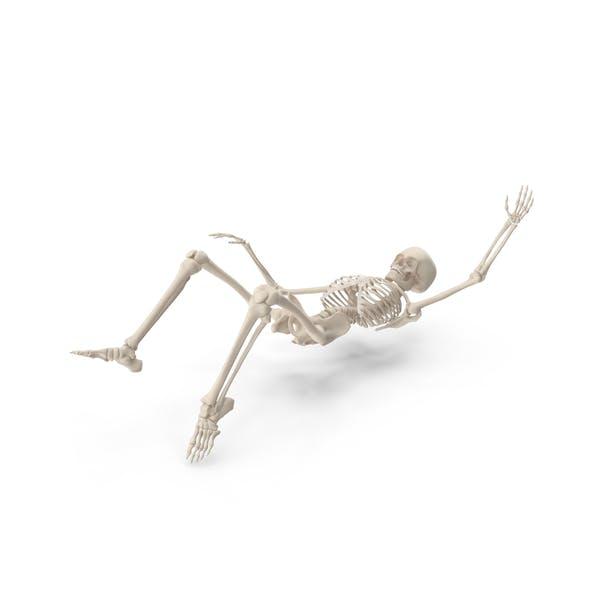 Thumbnail for Skeleton Falling